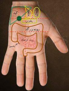 آموزش سوجوک تراپی( درمان بدون دارو)